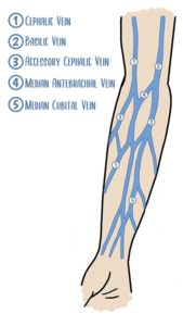 IV insertion - vein anatomy
